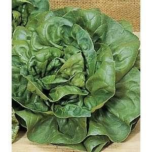 Lettuce, Burpee Bibb 1 Pkt. (1000 seeds) Patio, Lawn