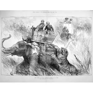 1876 Prince Wales Elephant Charged Tiger Wild Animals