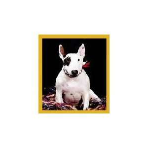 New Magnetic Bookmark English Bull Terrier Puppy High