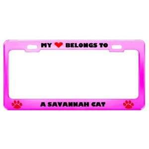 A Savannah Cat Pet Pink Metal License Plate Frame Tag