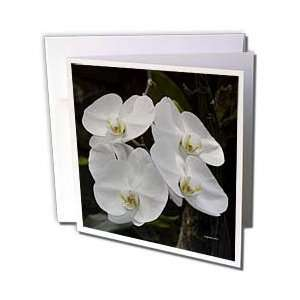 Jackie Popp Nature N Wildlife flowers   white orchids