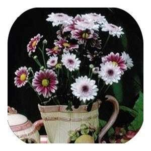 Coasters Country Flower/Flowers/Floral   (CSFL 105)