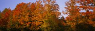 Fall Trees, Vermont, USA Photographic Print by Panoramic Images at