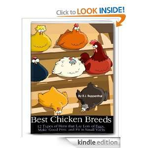 Chicken Breeds: 12 Types of Hens that Lay Lots of Eggs, Make Good Pets