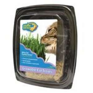 Ourpets Company 090124 Cosmic Kitty Cat Family Grass