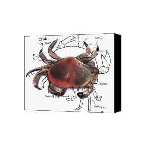 Crab Canvas Print / Canvas Art   Artist Carrie Glenn: Home & Kitchen